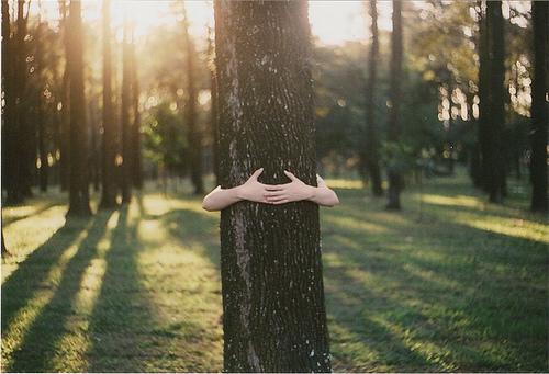 treehug.jpg